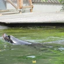 Ouwehands dierenpark Rhenen
