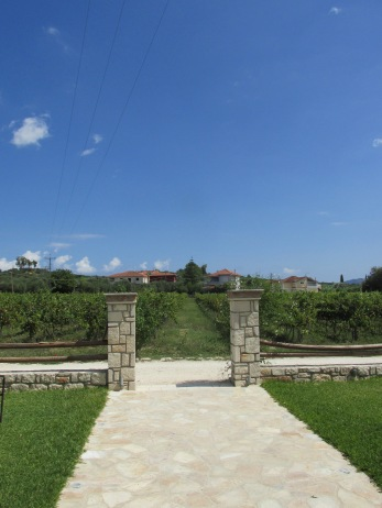wijngaard Grampas in Lagopodo (Zakynhos)