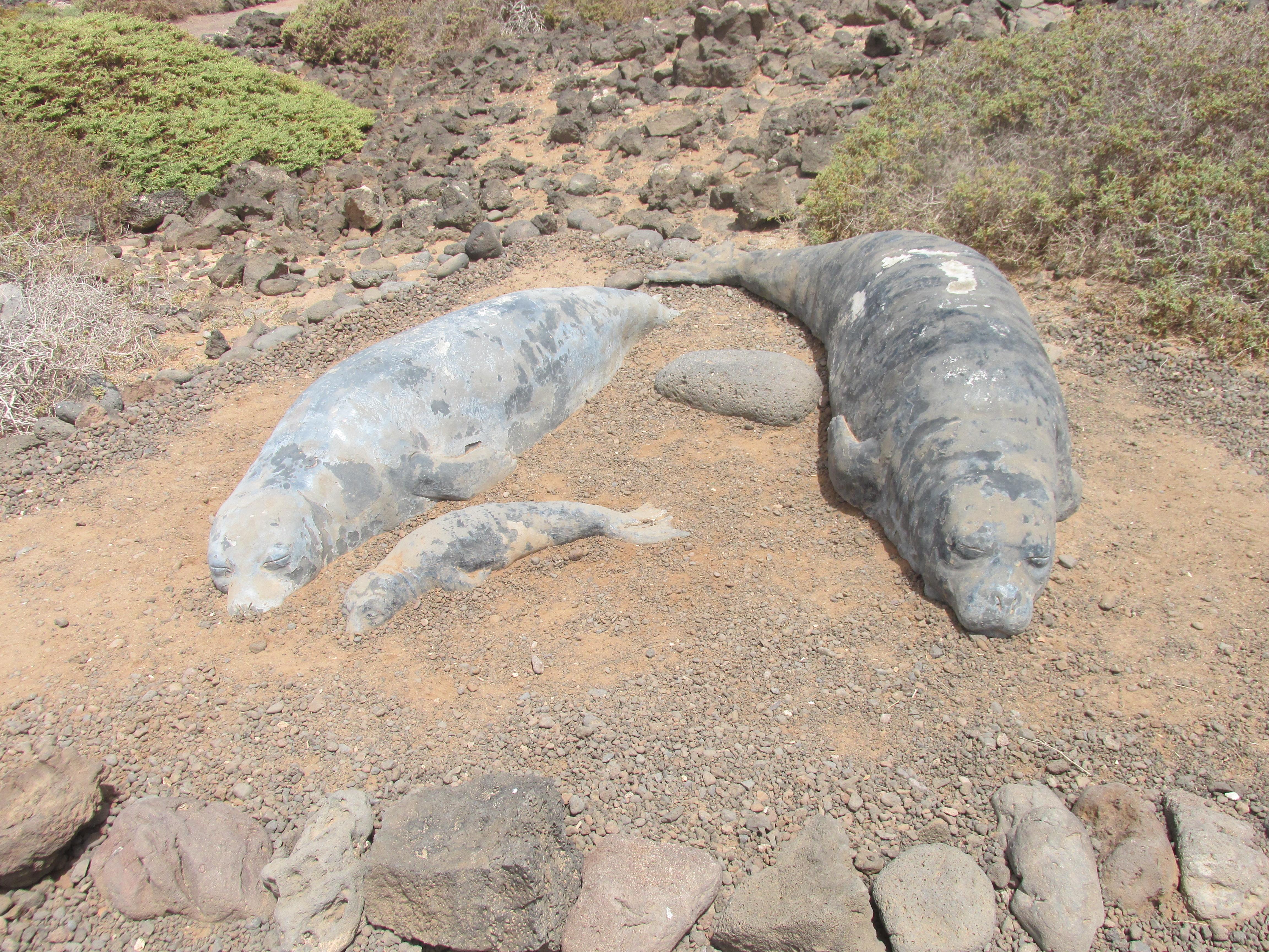 fotoblog: isla de Lobos