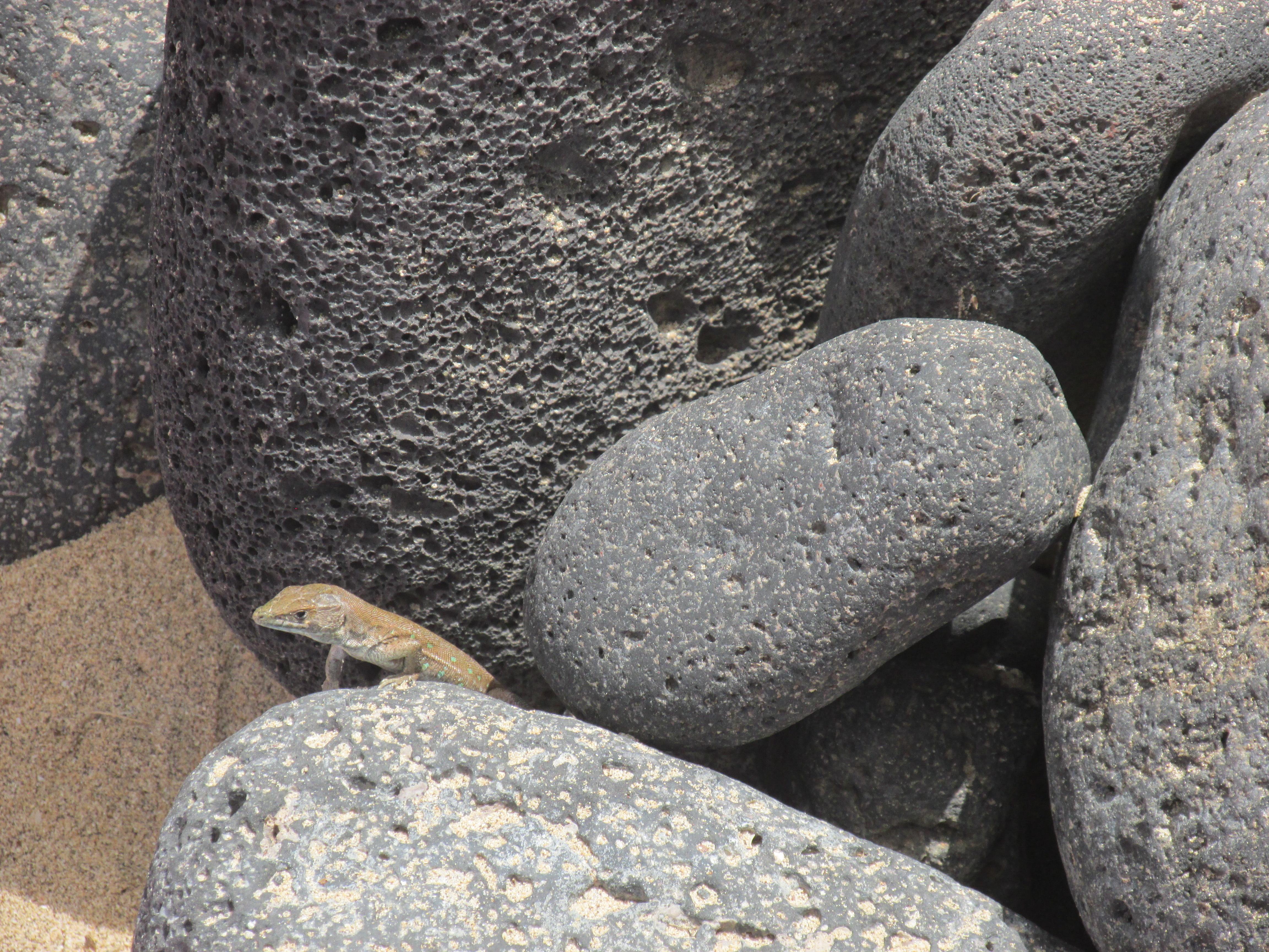 Leuke plaatsen op Fuerteventura: Isla de Lobos